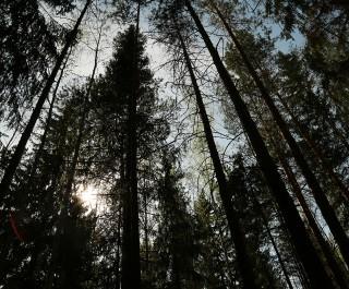 Trees in the Woodland park at European Village in Ekaterinburg