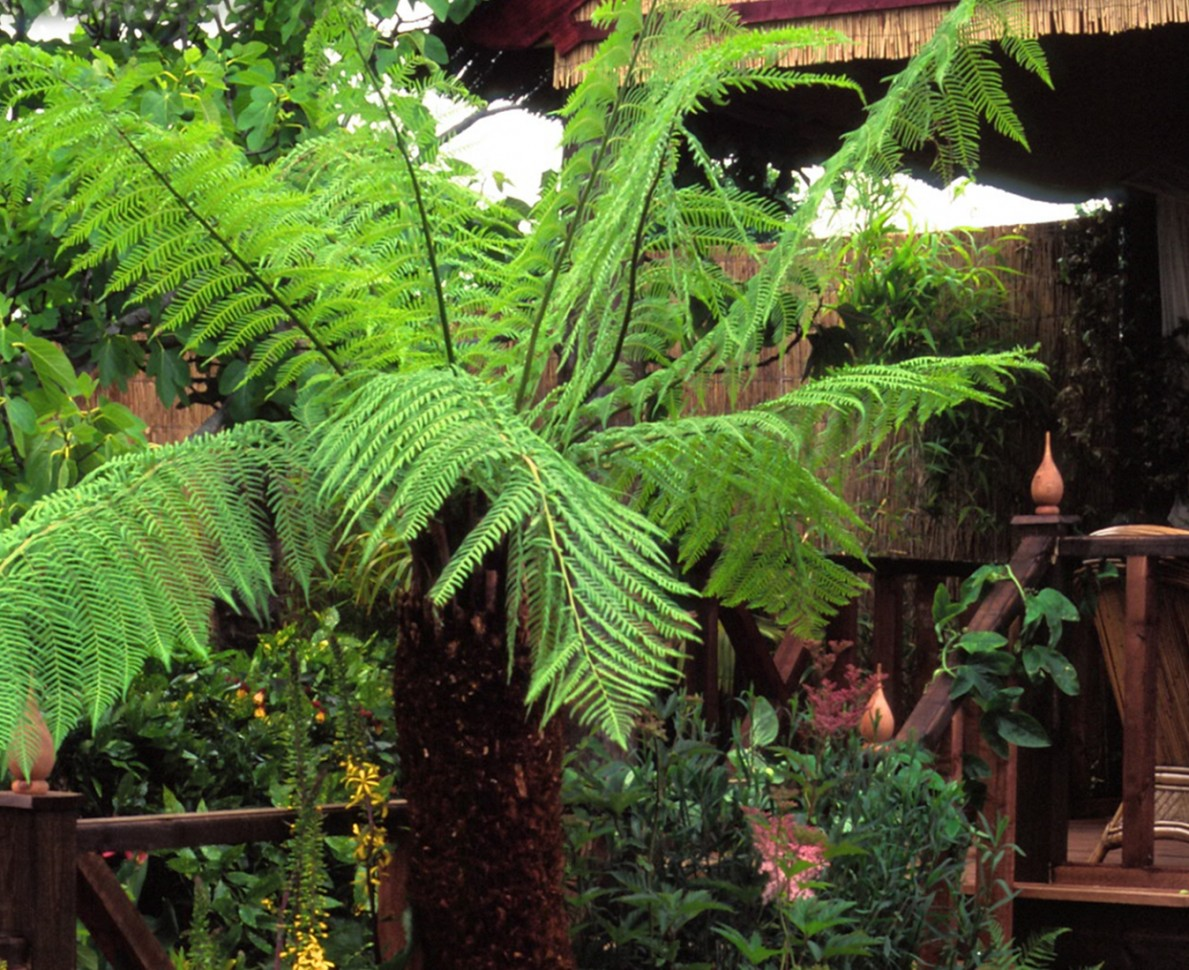 Australian fern in the garden at RHS Hampton Court Flower Show 1998