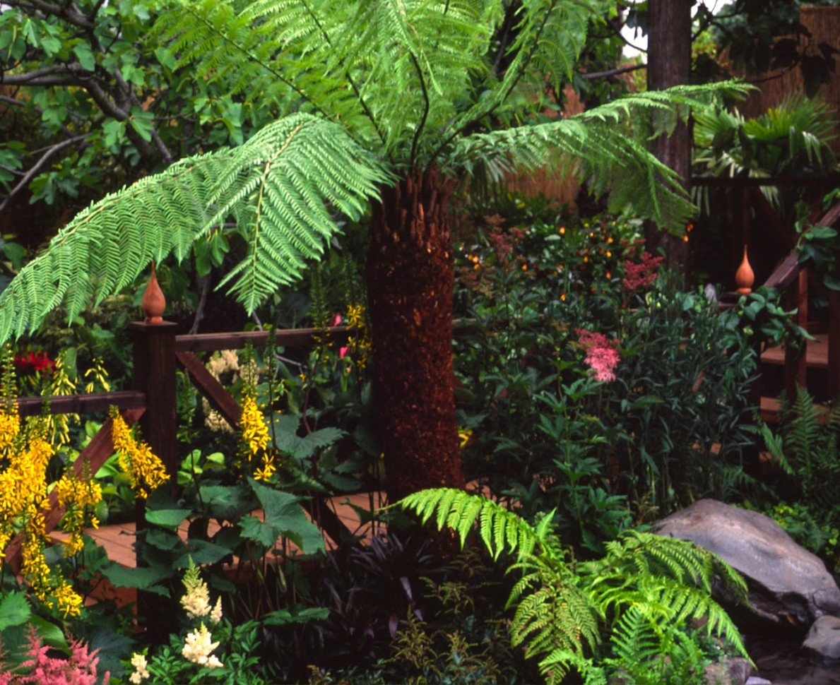 Australian fern surrounded by tropical flowers in the garden at RHS Hampton Court Flower Show 1998