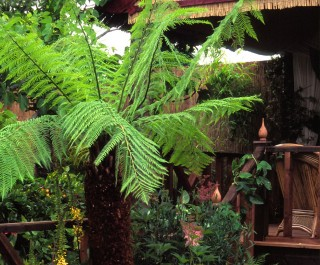 An Australian Tree Fern in the Hampton Court Palace Flower Show Garden 1998
