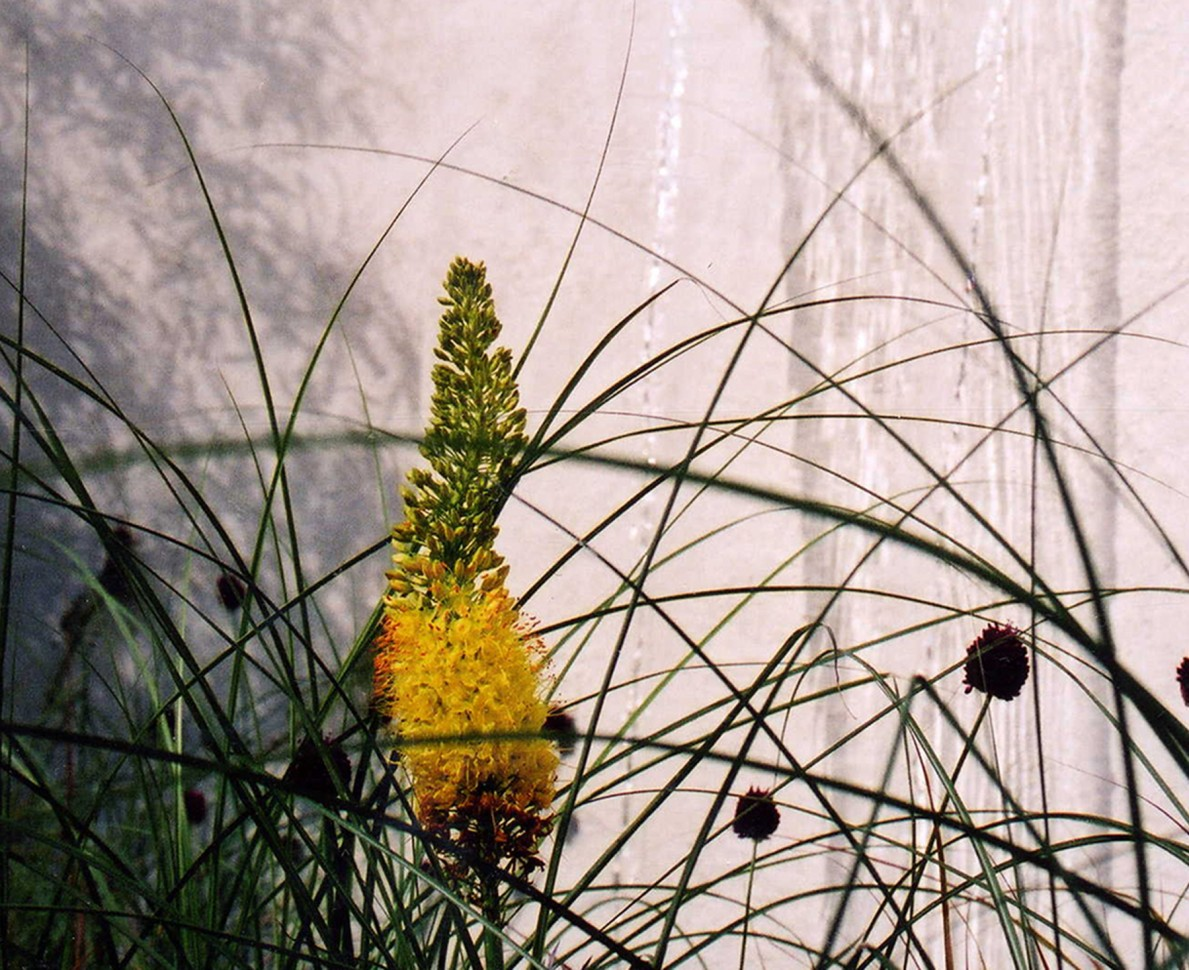 Close view of grasses with yellow flower in the Family Town Garden