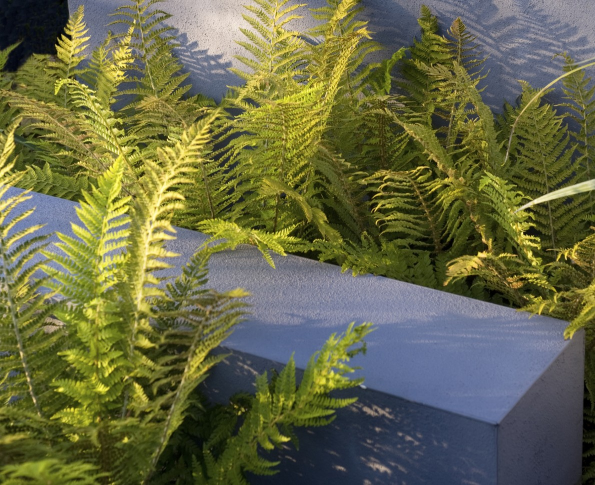 Contrast of the soft fronds of fern against the architectural planter