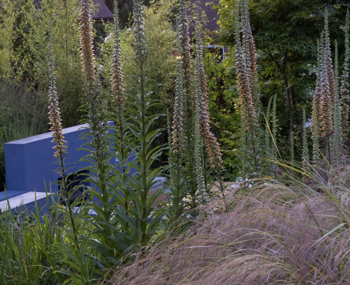 Grasses and hostas in the Modern Japanese Garden