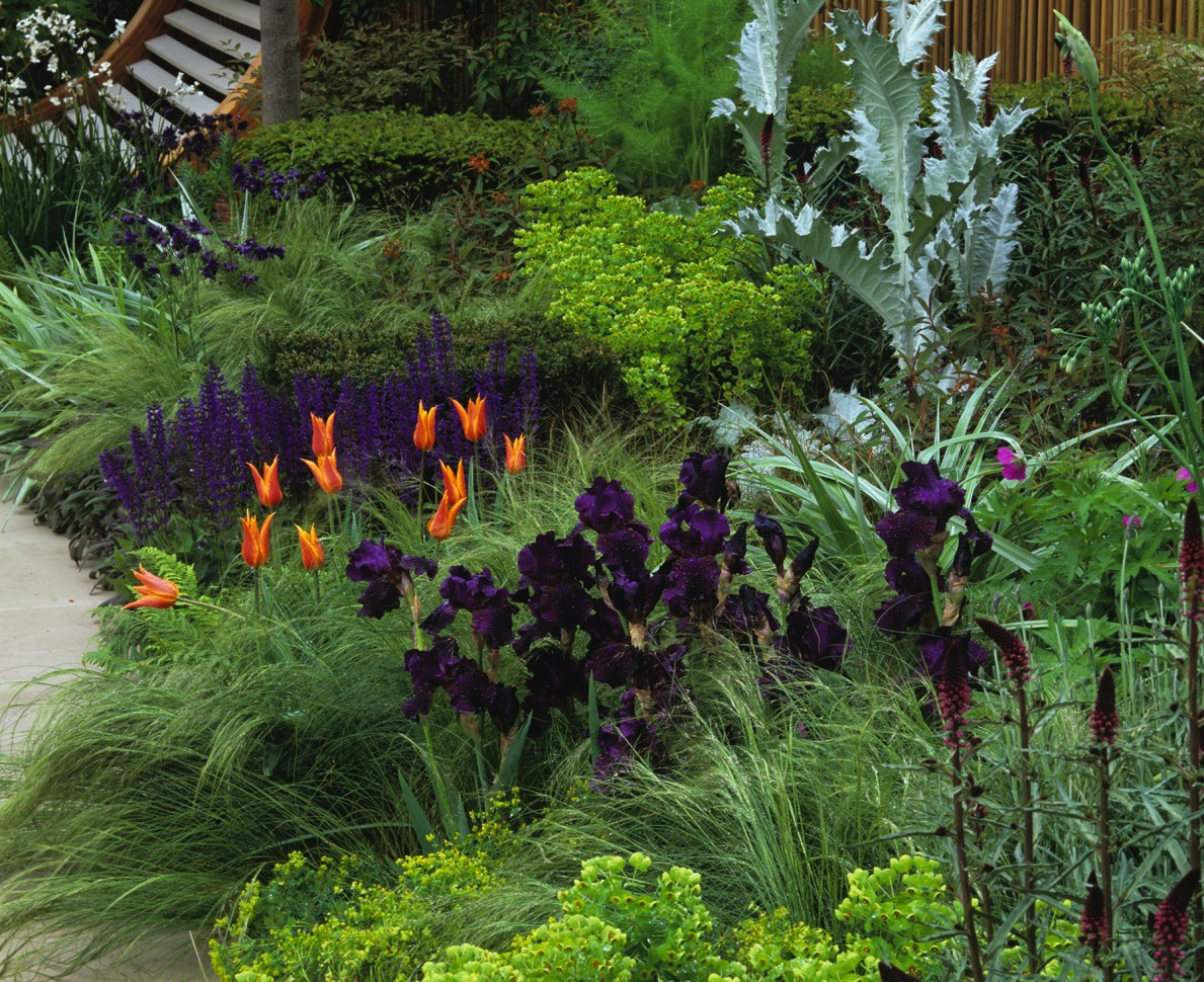 Purple irises and orange tulips - RHS Chelsea Flower Show 2006