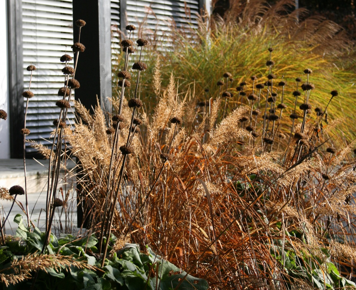 Grasses in a border at the Black Huf House