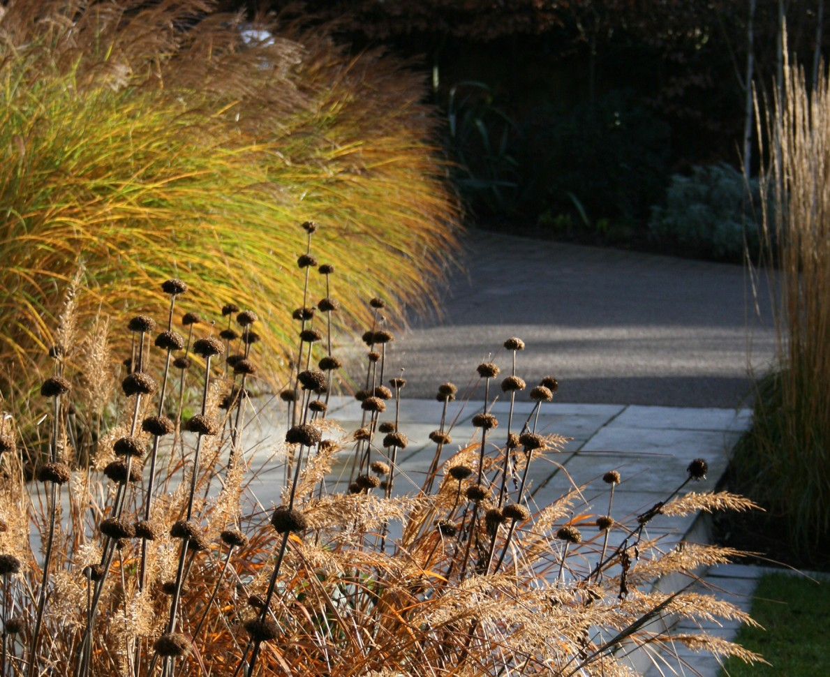 Grasses and a path in the Black Huf House garden