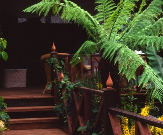 1998 RHS Hampton Court Flower Show Silver Gilt Medal winning garden with Australian ferns