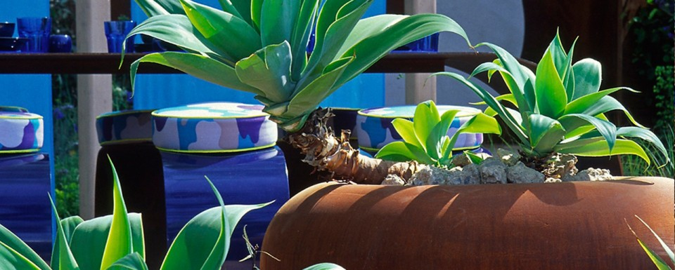 Modern Plant Pot Featuring Exotic Plant