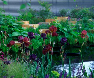 2005 RHS Chelsea Flower Show - gold medal winning garden with purple planting and cubes