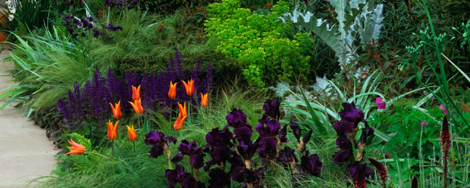 Beautiful Garden Bed Featuring A Variety Of Colours