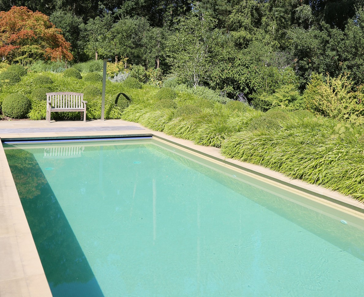 Swimming pool with grasses along one length