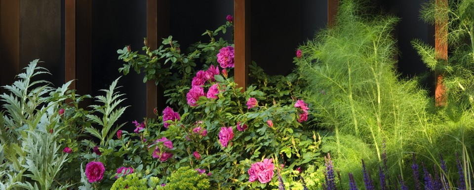 Our Mission header image - Chelsea flower show