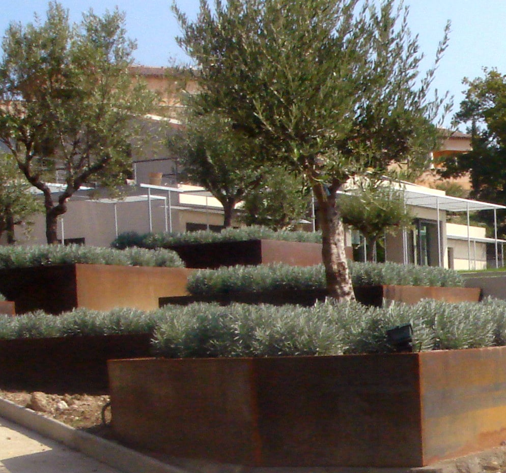 Traditional Mediterranean olive trees and lavender inside steel planters