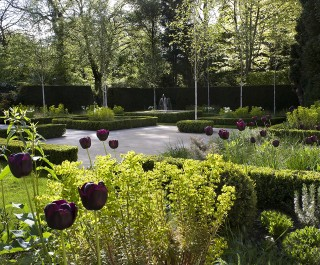 Purple tulips in a modern parterre garden looking towards the fountain