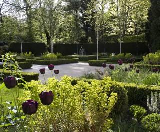 Purple tulips in a modern parterre garden looking towards the fountain