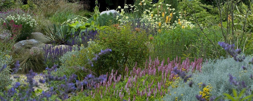 Stamens - Planting award winner at society of garden designers awards 2014
