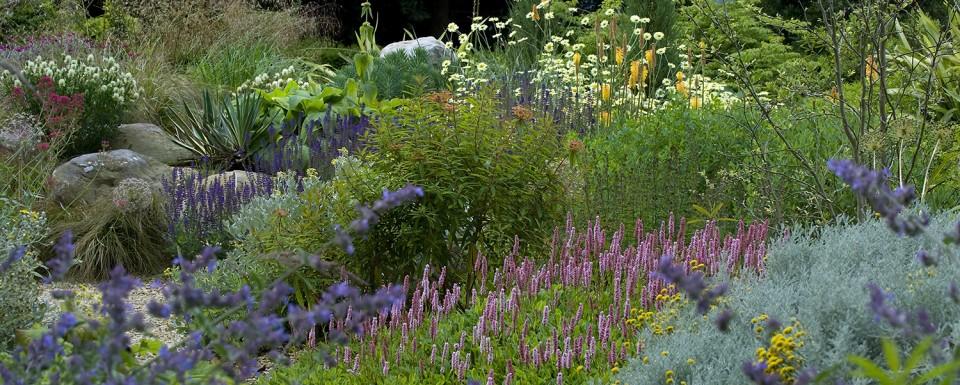 Stamens - Planting award winner at society of garden designers awards 2014