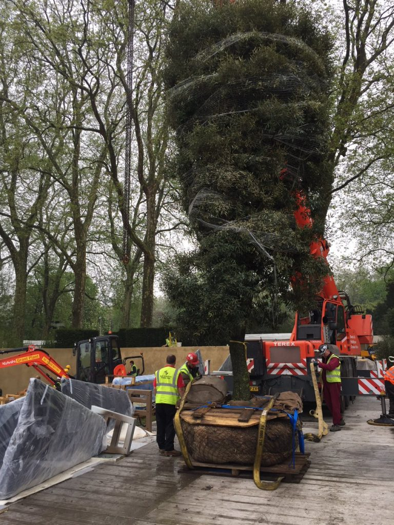 large tree going in