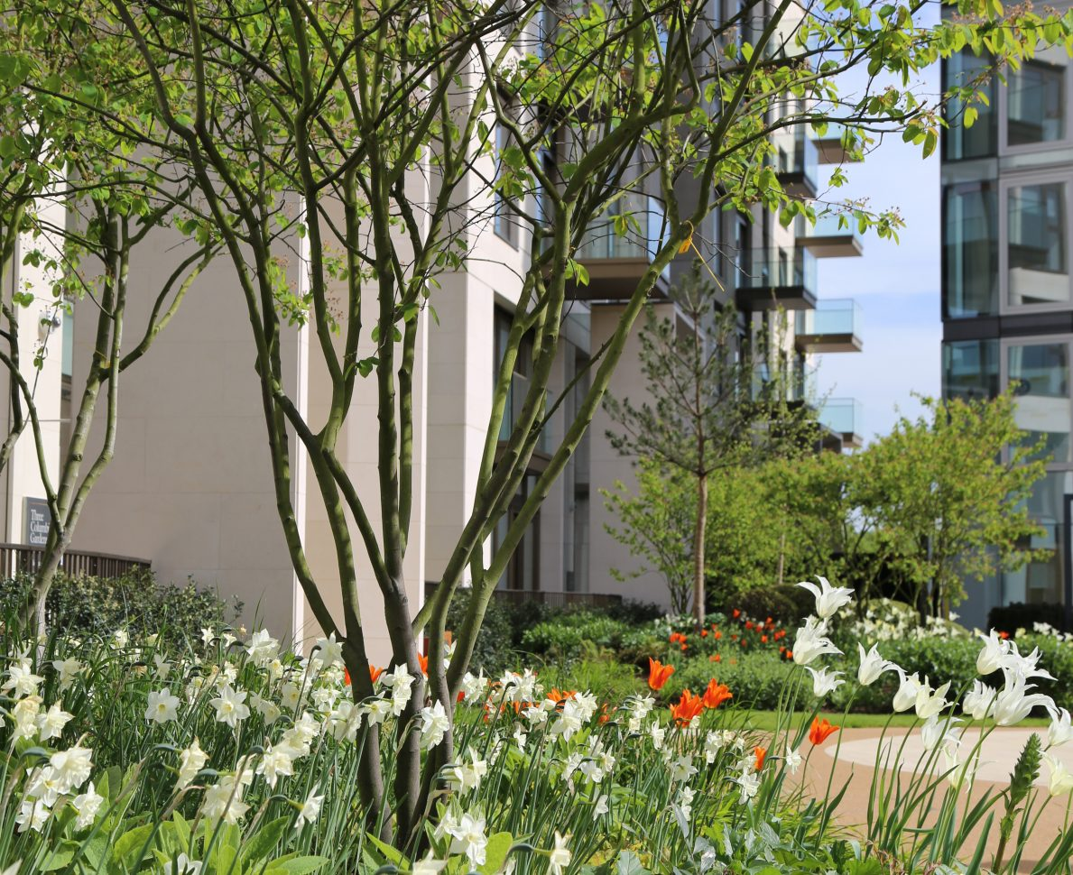 Lillie Square Residential Development In London With Colourful Flowerbed And Trees