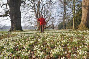 'The Pergola' at The National Trust's Beningbrough Hall Garden near York. Andy Sturgeon Design