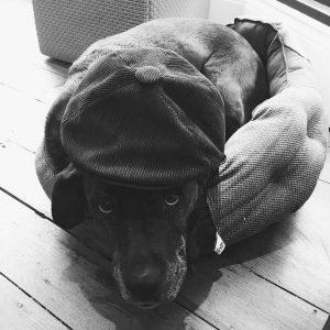 Bassy The Dog_Andy Sturgeon Design