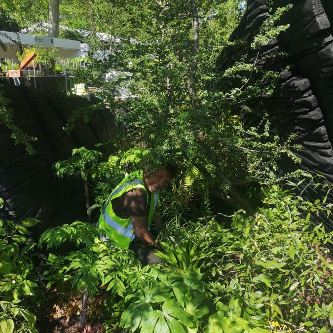garden designer sussex  u0026 london
