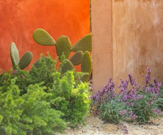 Radicepura Garden Festival 2019 cacti and plants contrasting against the striking orange wall