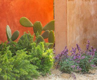 Radicepura Garden Festival 2019 cacti and plants contrasting against the striking orange wall